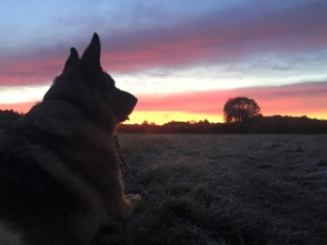 Seth and the fields at dawn